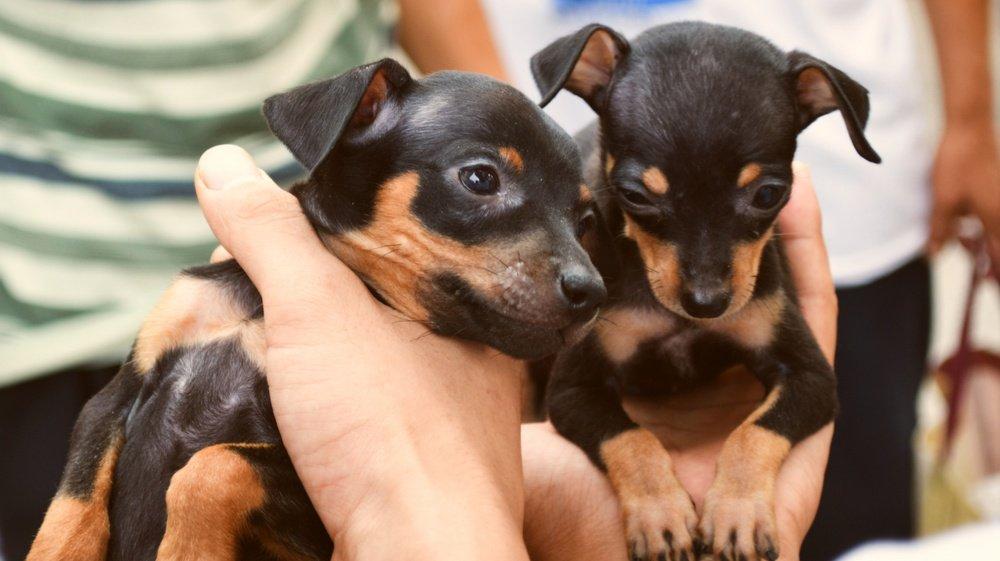 Polícia suíça desmantela tráfico de cães