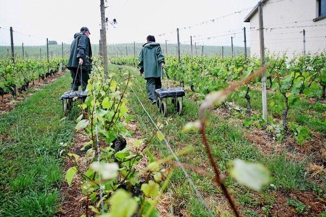 Suíça: Voos fretados trazem trabalhadores portugueses